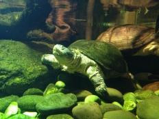 Hello, turtle friend.