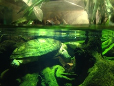 Turtles saying hi.